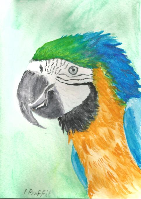 Colourful Macaw - Watercolour