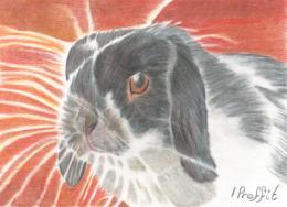 Super Bunny? - Coloured Pencils