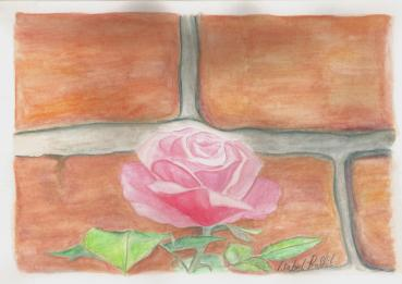 A Rose against the wall - Watercolour pencils