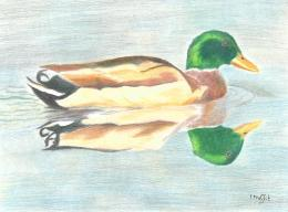 Reflections - Coloured pencils