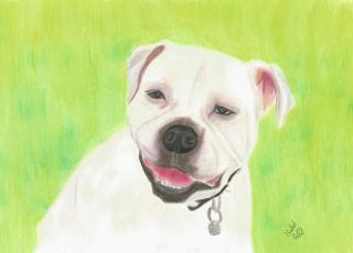 Commission - Coloured pencil picture