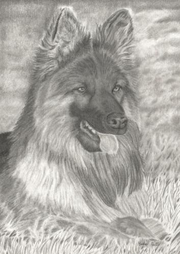 graphite-german-shepherd-300-dpi