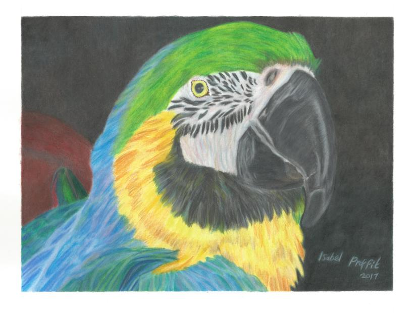 macaw low res