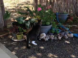 Charcoal exploring Maria's potted plants