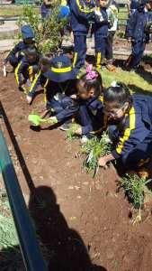 plantando flores isaiah bowman