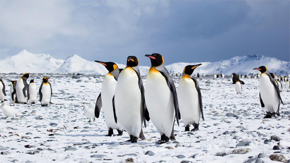 penguins-antarctica