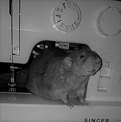knutsel ideeën voor ratten