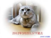 老猫のシマ、18年の生涯を閉じる……