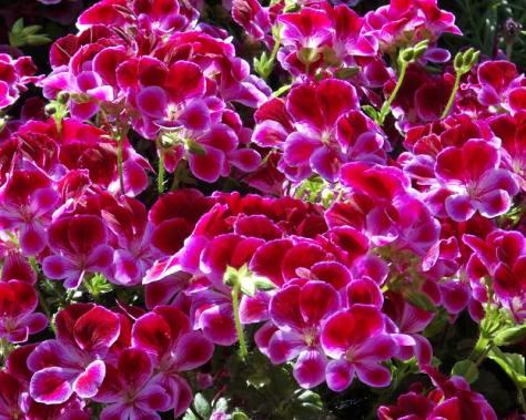 photo by www. gardensonline.com.au