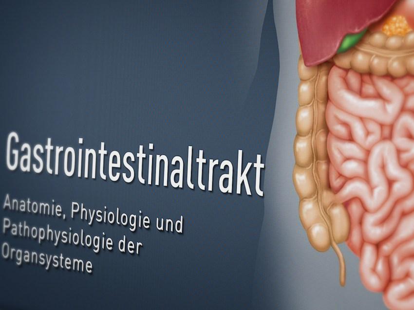 ismk-gastrointestinaltrakt-01