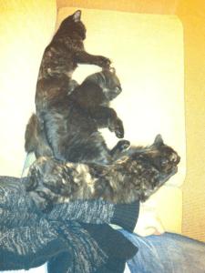 gareth's cats