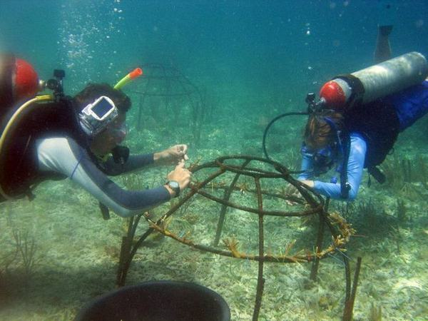 Reef restoration in Belize by Lisa Carne and the Fragments of Hope coral nursery
