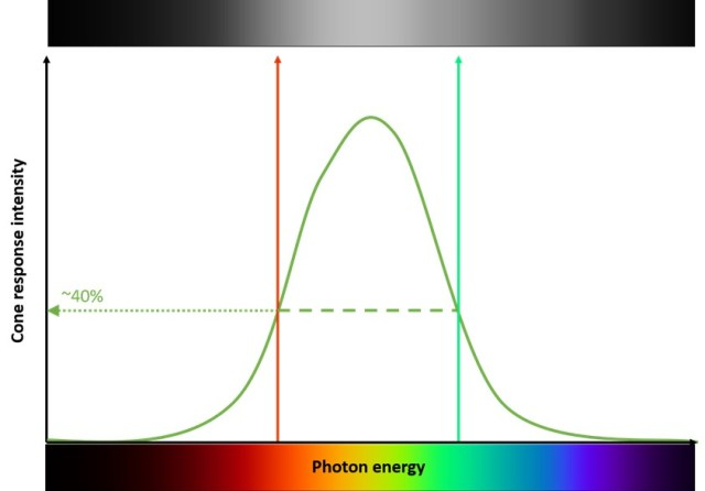 graph depicting a normal distribution of photon energy vs cone response intensity