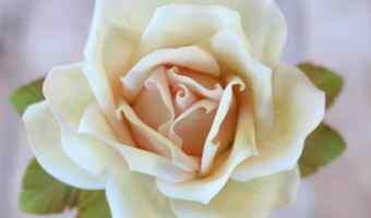 How to Add Color to a Large Gumpaste Rose