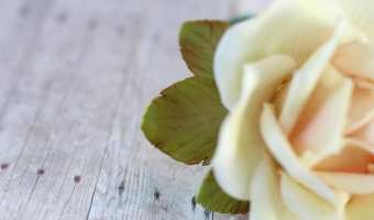 How to Make and Color Gumpaste Rose Leaves