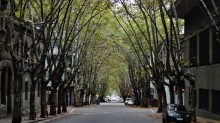 Montevideo tree canopy street