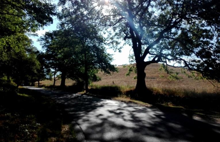 Vej med træer og mark