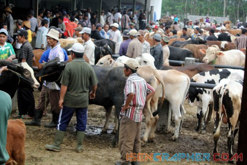 in the middle of the cow market