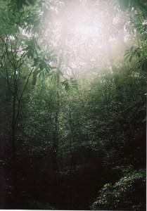 伊勢森の光
