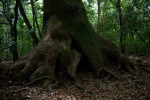 伊勢神宮の神木