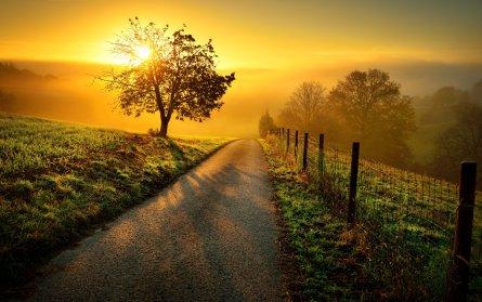Billede af en vej, du selv må gå med Familieopstilling
