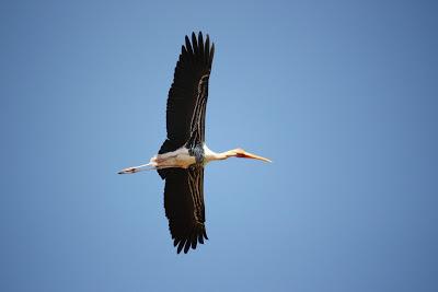 Migratory Birds at Kokrebellur