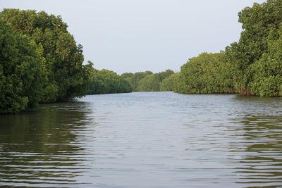 eco tourism Peechavaram 1