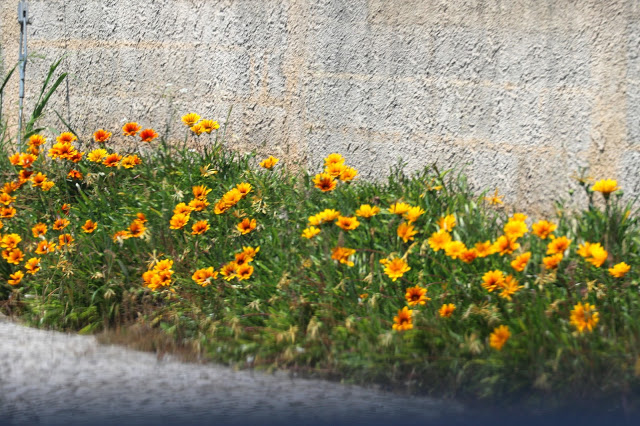 Alcobaca flowers