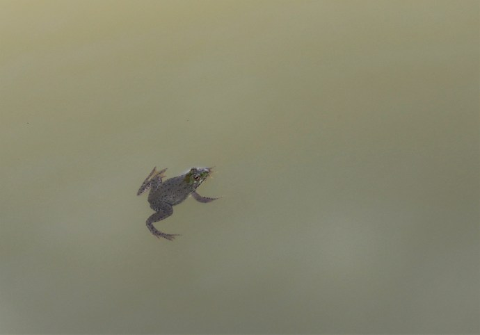 Frog wordless wednesday