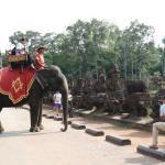 Elephant wordless wednesday