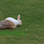 rabbit-and-tortoise_1