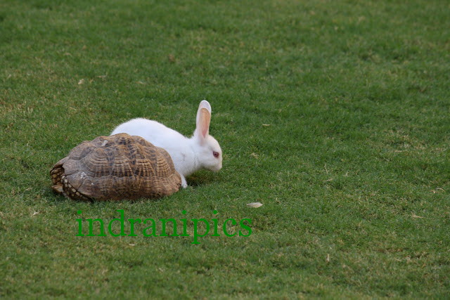 rabbit-and-tortoise_1