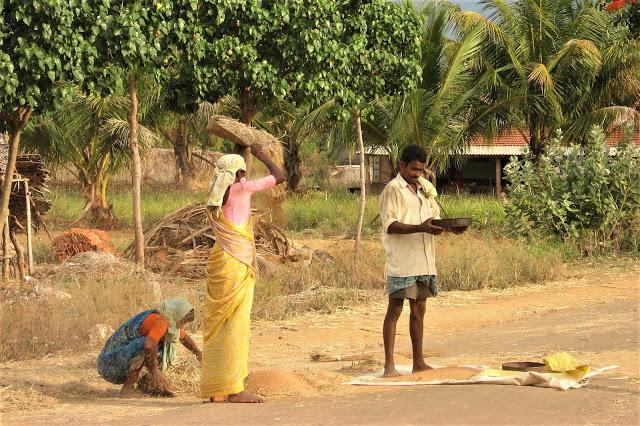 Rural agriculture facesof India