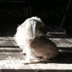 犬の手術で感じた「生き物を飼う大切さ」