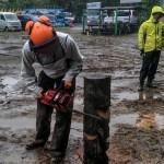 専業林業は難しい?兼業林業家が語る林業の実態