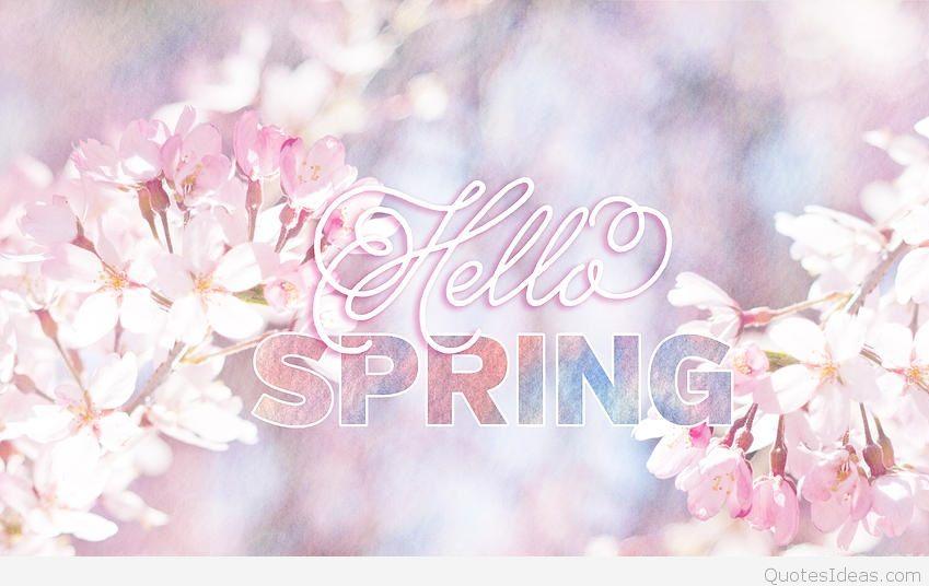 hellospring-sakura