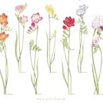 石川県産のエアリーフローラは母の日におすすめ!花言葉や価格に販売場所は?