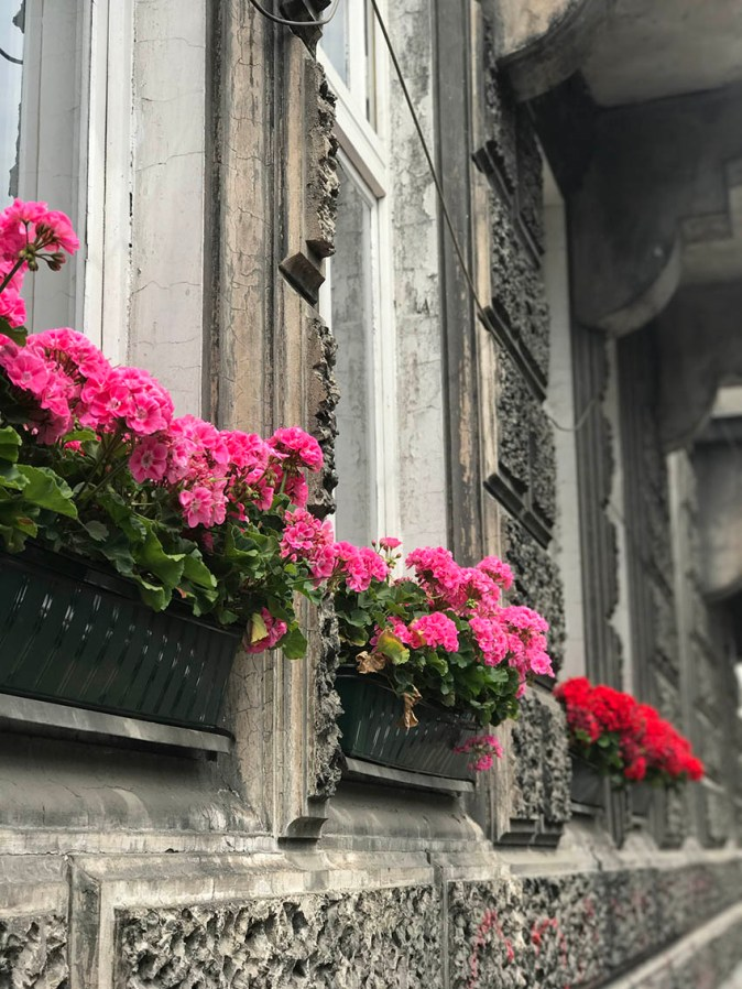 Summer flowers blooming in the windows in Krakow