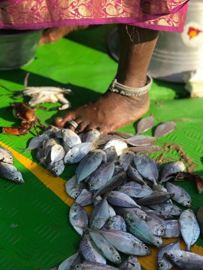 Fresh catch at Kovalam beach in Chennai