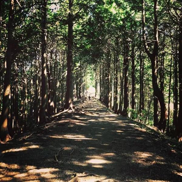 都内では味わえない自然。気持ちはリラックス。#塔ノ岳#道中 (by Instagram)