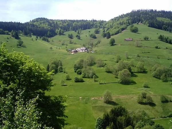 Black Forest / Schwarzwald