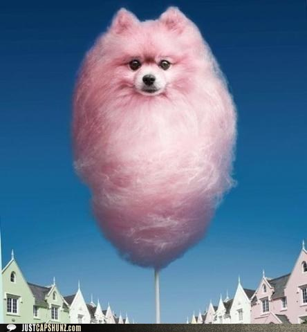 funny-captions-cotton-candy-capshun-contest