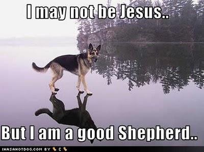 funny-dog-pictures-jesus-shepherd