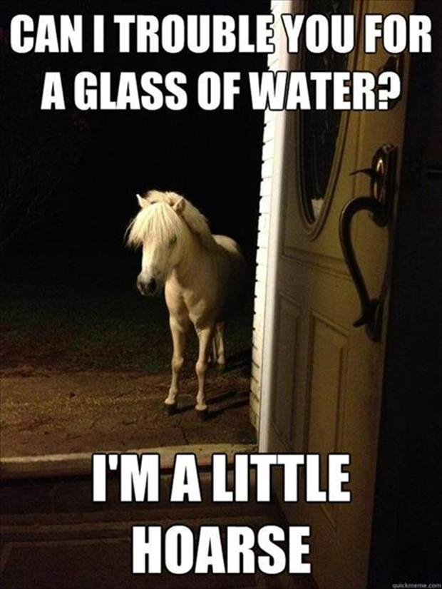 funny-horse