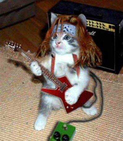 rock_star_cat