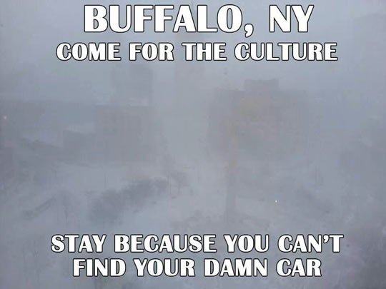 funny-Buffalo-car-snow-winter-culture