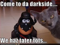 Funny-kitteh-with-tater-tots-P-tater-tots-18577552-259-194