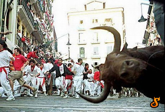 funny-bull-photobomb-Spain