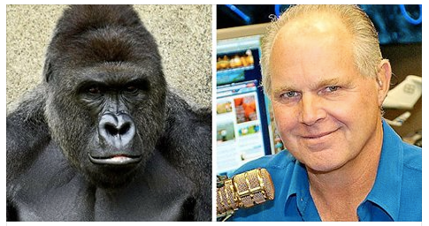 Rush Limbaugh Confused Why Gorillas Exist at All