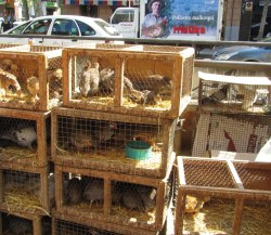 palma-vogelmarkt - Märkte auf Mallorca